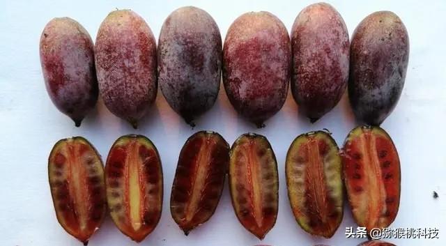 软枣猕猴桃适合温度、猕猴桃冬季冬肥管理、猕猴桃冬季肥料管理