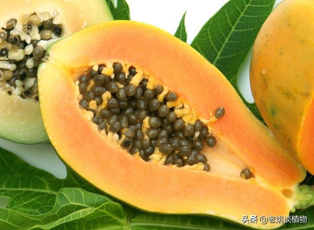 南方农村种植的番木瓜有什么用途?