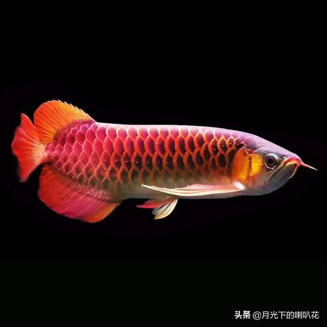 家里有个鱼缸,养点什么鱼能突现出我与众不同的品味?