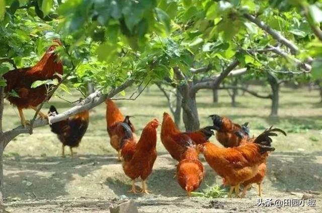 菜园养殖业什么最赚钱?什么茶树适宜养殖业大葱?在小龙虾养殖业中,EM菌好却是光合菌好?为什么?