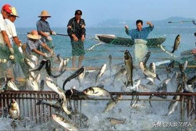 10米深的鱼塘养什么鱼好 10亩山塘5米深养什么鱼好?