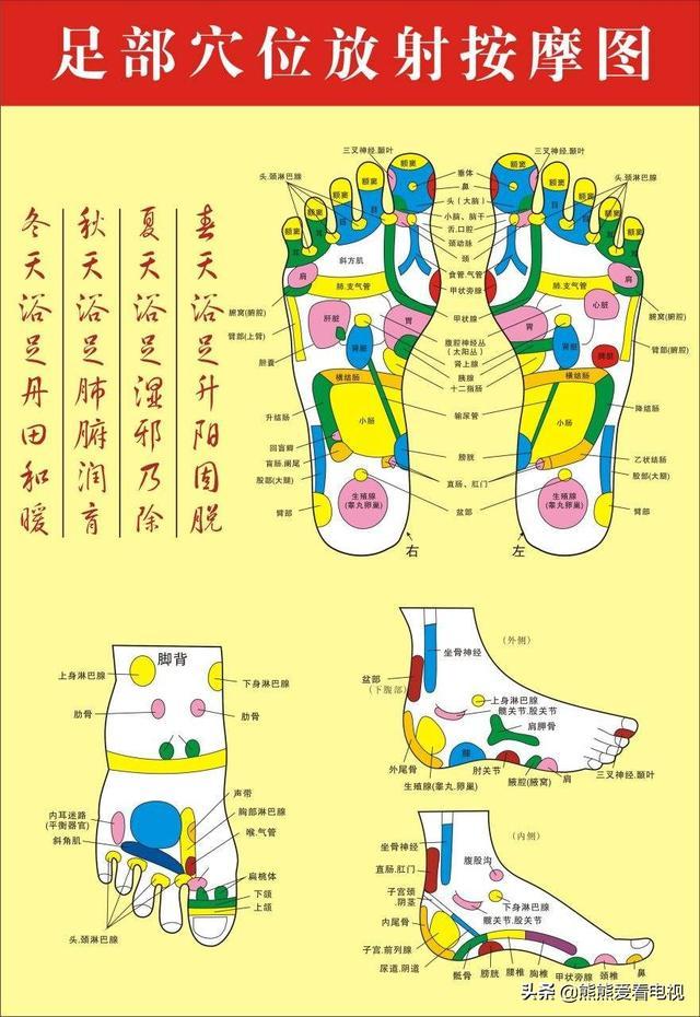 足底反射区图,长期按摩脚底有什么好处?