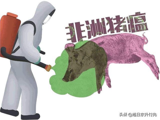 非洲猪瘟疫情发生几年了,屡消不灭,到底是什