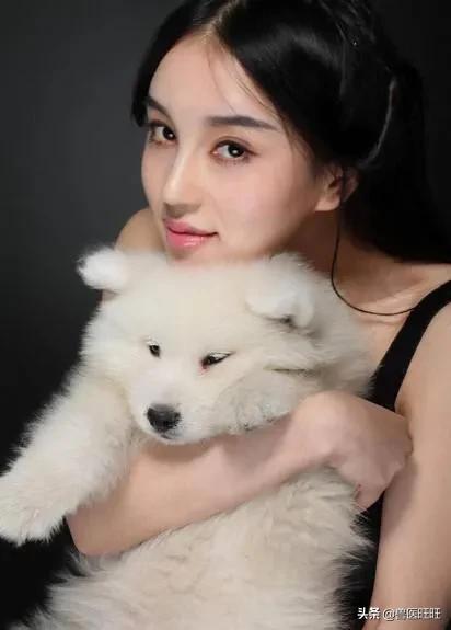 狗粮怎么选(狗粮怎么选才知道好坏?)