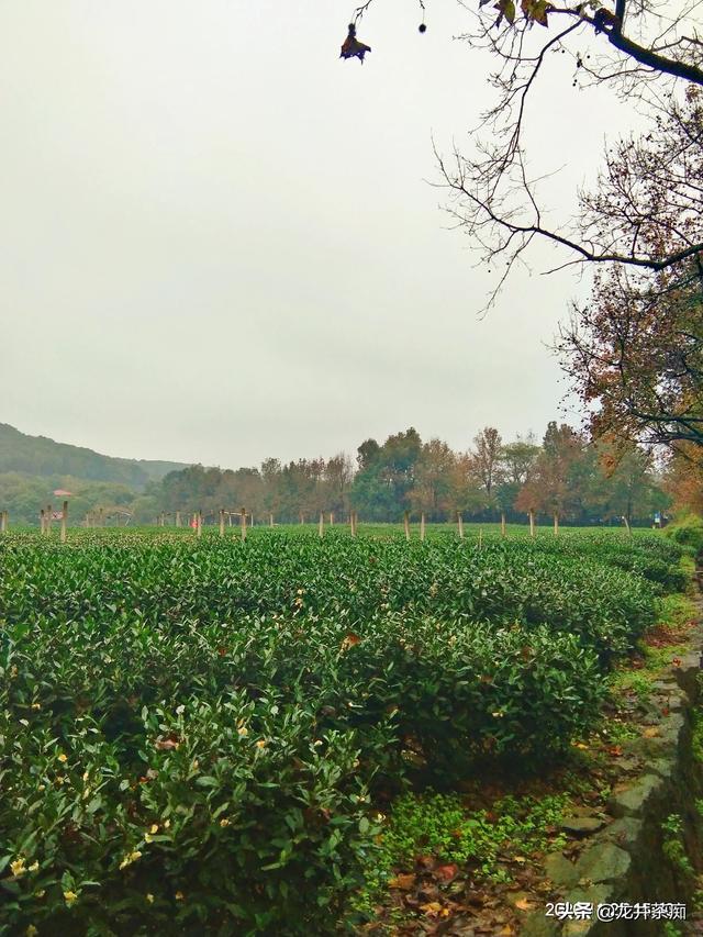 中国十大茶叶,中国十大名茶什么茶好喝?