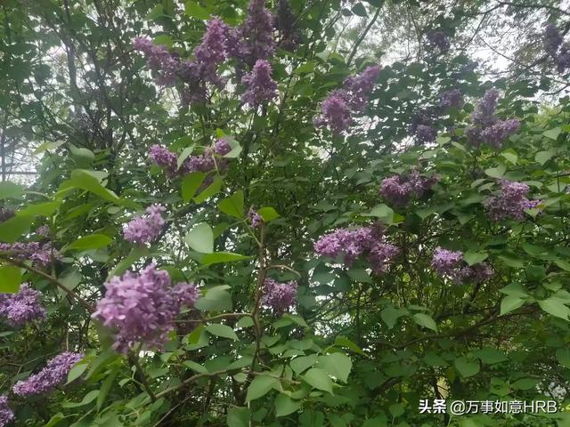 上海放飞心灵按摩:第一次按摩是什么感觉?😂😂😂?