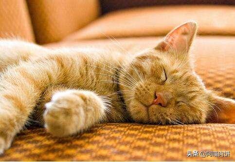 猫咪衰竭:猫咪急性肾衰竭形成的原因是什