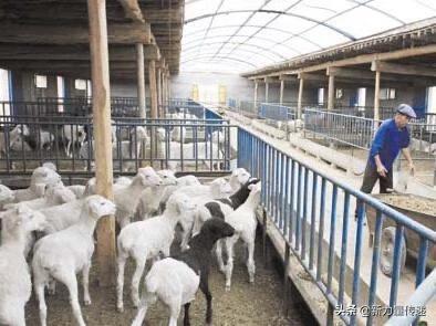 贫困地区建喂食牲畜的房子违规吗?养鱼海盐有什么用?