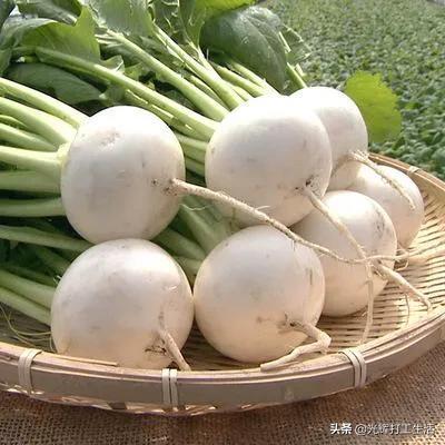 芜菁是什么蔬菜?如何种植?