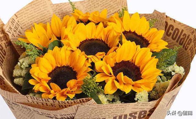 头像太阳,向日葵做微信头像是什么意思?