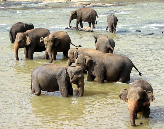 亚洲象为什么会离开西双版纳?