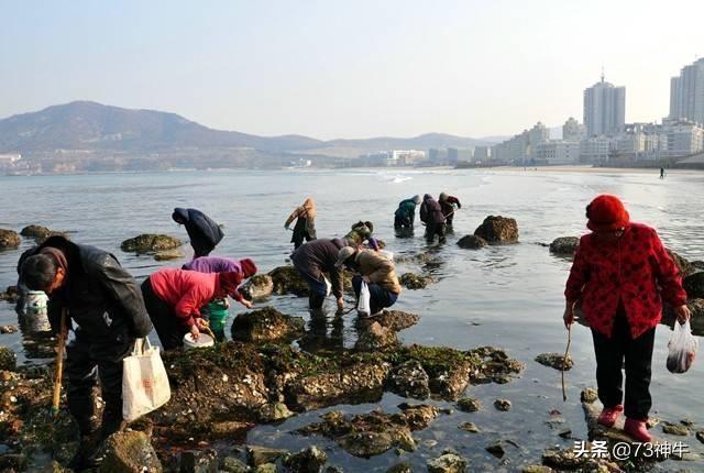 对于自媒体中的赶海视频,几乎每天赶海都能捡到大鱼大螃蟹,很好奇是确实捡到还是摆拍的?