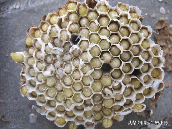 防癌抗癌 有人说蜂蛹有防癌抗癌的效果,是人类