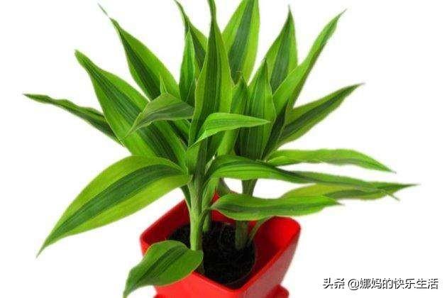 什么植物适合摆在新房子里,又有好的寓意?