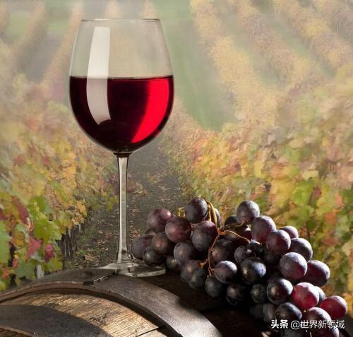 宁夏葡萄酒都有哪些著名的品牌呢?(图2)