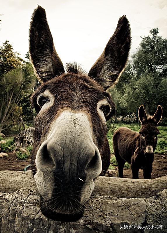 家在烟台贫困地区想养殖业,有意向是:驴,牛,长颈鹿,黑熊等,别的好?最近网传罗志祥的事,这些曝料真实