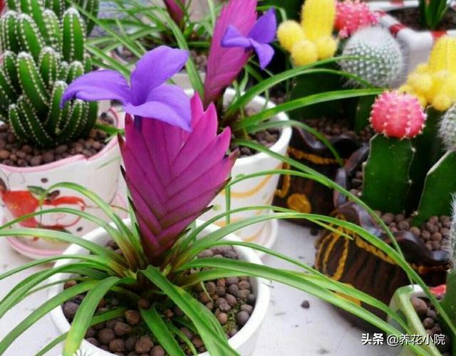 花卉换盆后应如何管理?求解答?