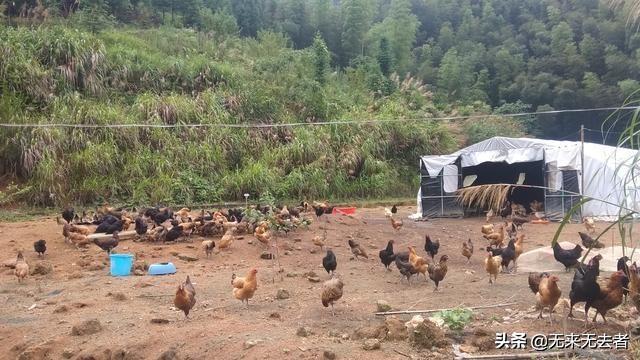 生前有千佛山荒地,想搞绿色生态大葱养殖业,消费市场大吗?现在天气愈来愈热了,想给猪场里灭菌,不知道该