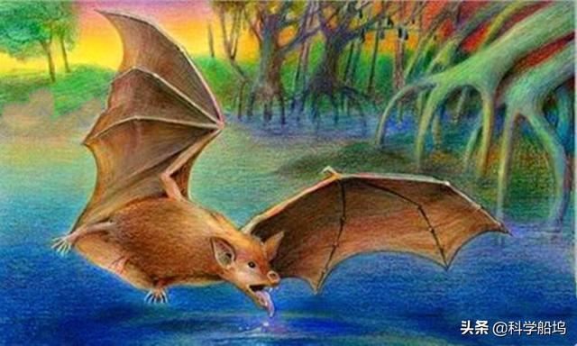 全球新冠病毒疫情蔓延,病毒源头还是蝙蝠吗?